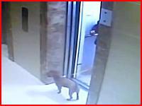不注意が愛犬を死なす事に。犬を連れてエレベーターに乗る時に注意すべきこと。