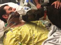 脳室内出血から回復しなかった飼い主の最後のお別れに立ち会ったワンちゃんのビデオ。