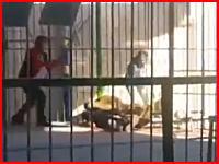 アレクサンドリアサーカスで死亡事故。ショーの最中にライオンが飛びかかり首に噛みつく。