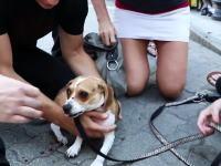 犬が本気を出すと人間には止められない。路上で黒犬に襲われる小犬と飼い主の女性。