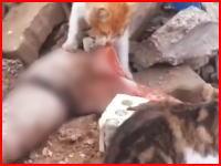 モスルで撮影された人間の死骸を漁るネコちゃんたちの映像。足は美味しいのかな(´・_・`)
