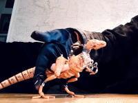 指恐竜!?動きがとても楽しいパペットダイナソーのビデオが人気に。