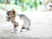 息絶えてゆく子猫を悲しむ兄弟ネコたち。最期を見送るママ猫の姿も。