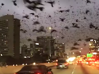 これはちょっと不気味。ドライブ中に遭遇したヒッチコックもびっくりな鳥群。