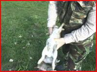 狩猟したウサギさんから内臓を取り出す方法がなかなか衝撃的だった。
