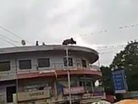 ビルの屋上から飛び降りた「牛」インドで撮影された自殺牛のビデオ。