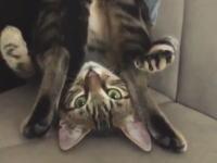 このネコちゃんどうしたwww奇妙な体勢でグーパーするニャンコが人気。