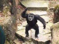 このチンパンジーミラクル酷いwww観客を油断させといてとんでもない事をしでかす。
