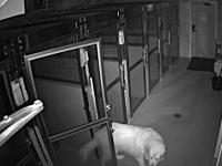 いとも簡単に。動物病院から脱走するワンちゃんのビデオが人気に。