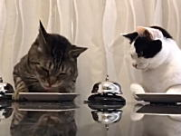 おやつよこせベルの使い方をマスターしたニャンコたちのビデオが人気に。
