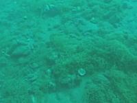 ダイバーが水中でマグニチュード5.7の地震に遭遇。その瞬間の映像が公開される。