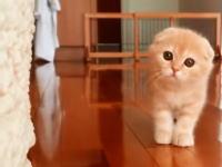 「だるまさんがころんだ」をするのが子猫だった場合。ビビるくらい可愛いwww