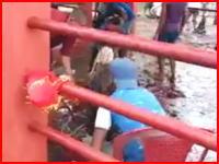 ズバッ!ズバッ!と首を切り落としていく羊の屠殺映像がなかなか衝撃的(@_@;)