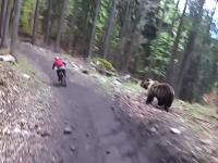 怖すぎワロタ。巨大な野生のクマに追いかけられる自転車の映像が話題に。