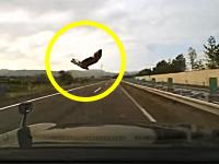 一瞬の衝撃映像。東北自動車道でバードストライク。こういう場合はどうするべきなのか?