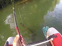 ルアーはアヒル!?フローターで1.5メートルの巨大ナマズを釣り上げるビデオ。