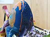 沖縄の市場動画。青い魚のお刺身。イラブチャーの舟盛りができるまで。