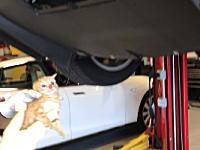 これはもう飼おう!テスラのバンパーの中から救出された子猫ちゃん
