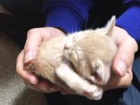 どうしても飼い主の膝の上で眠りたい子猫のビデオが大人気に(*´д`*)