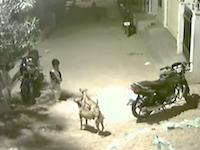 インドでは野良犬に囲まれて怯んでいては生きていけない。野良犬に襲われかけた幼い兄弟の映像。