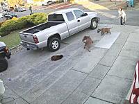 制御できない犬を飼っちゃイカン(°_°)のんびりしていたネコちゃんがピットブルに襲われる衝撃映像。
