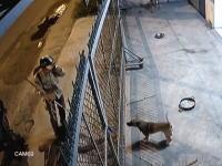 食うのかな(@_@;)庭のワンちゃんを殺して奪うベトナムの犬泥棒。