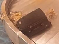 ちょwww空港の手荷物受取所がなんでこうなってるの状態にwwwww