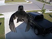 どうなってる。監視カメラに映った「浮遊する鳥」の映像が話題に。