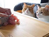 【料理】ニャンコにお寿司を作ってあげる動画が高評価に。JunsKitchen