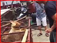 犬食文化。中国で撮影されたワンコ肉屋の殺し方が衝撃的すぎる(@_@;)つらい。