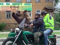 ロシアではフルサイズベアーを乗せたサイドカーに出会うことがある動画。「Only in Russia」