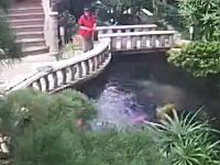 そんなところで。掃除をしていたメイドさんが庭の池で溺れてしまう映像。