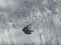 滑落するイノシシ。雪山の凍結した斜面を転がり落ちるイノシシの映像。