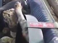 エンジンルーム内ですごい挟まり方をしているネコが発見される。