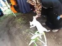 飼い主が埋葬された墓から離れようとしないネコちゃんの映像が泣ける(TдT)