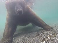 熊は水中でどのように狩りをするのか。その様子を水中カメラで撮影した珍しいビデオ。