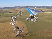 夢のような体験。鳥の群れと一緒に空を飛べるサービスが凄い。