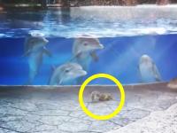 これはカワイイwwwリスに興味津々なイルカたちに萌えるビデオ。