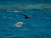 水中から飛んでる鳥を捕食するジャイアントトレバリーさんのビデオ。かっけええええ。