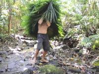 原始生活の人が動画のために熱帯雨林を購入。新シリーズがはじまる。