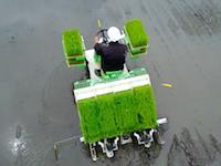 お米つくりの一年を空撮。田起こし、代掻き、田植え、稲刈り→ゴハン。