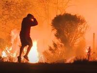 カリフォルニアの山火事から野ウサギを助け出す男のビデオが話題に。