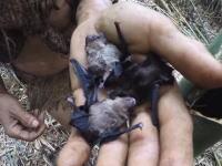 リアルターザン。41年もの間ジャングルの中で外部と接触せずに生きた男のビデオ。