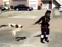 なんでそんな事するの(´・_・`)子犬2匹を投げ飛ばす動画をSNSに投稿した少年が炎上中。