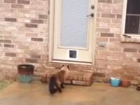 ペットのシャムちゃんのために1時間半もかけてキャットドアを設置したのに(´・_・`)