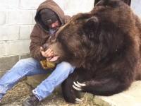 こんな巨大なクマが人に懐くとかあるんだ。恐ろしい大きさのクマとおじさん。