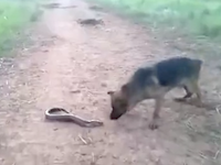 陸にあげられた電気ウナギに噛み付いたワンちゃんがwww(10秒動画)