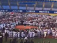 これは怖いwww稲村亜美がリトル野球の始球式で数百人の球児に潰されそうになるwww