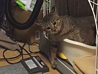 子猫の「てんかん発作」見てるだけで辛い激しく痙攣しているビデオ。注意。