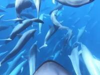 これはすごい。大きなイルカの群れと一緒になって泳ぐダイバーの映像がステキ。